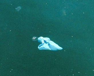 Müll im Meer_ Kopenhagen Stefanie zugeschnitten